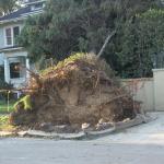 Pasadena destruction