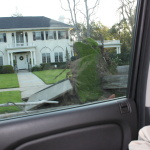 Tree uprooted, Pasadena