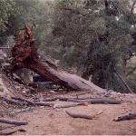 Tree1_down